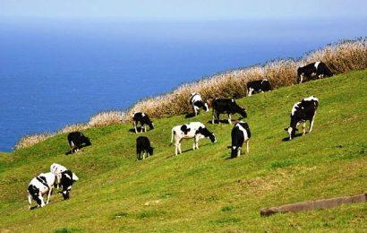 Produtores de leite açorianos só podem receber até 900€ anuais da União Europeia
