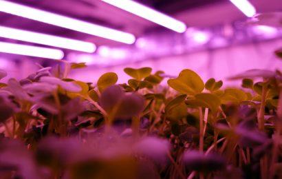 Empresa portuguesa apresenta solução inovadora para cultivar alimentos todo o ano
