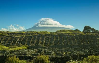 Madalena Cidade do Vinho em exposição no Azores Fringe Festival