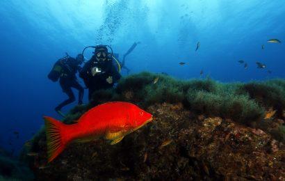 AOMA critica acessibilidades e delapidação dos recursos marinhos nos Açores