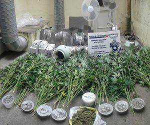 plantas droga